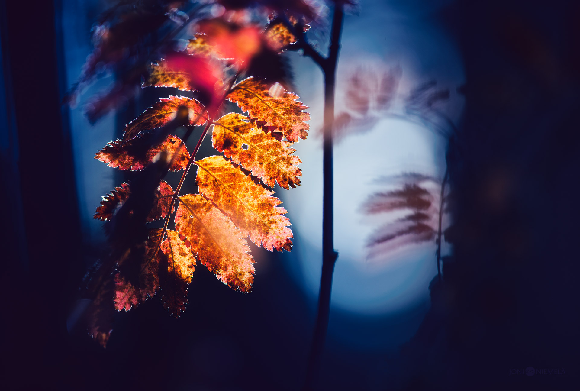 Rowan Leaf