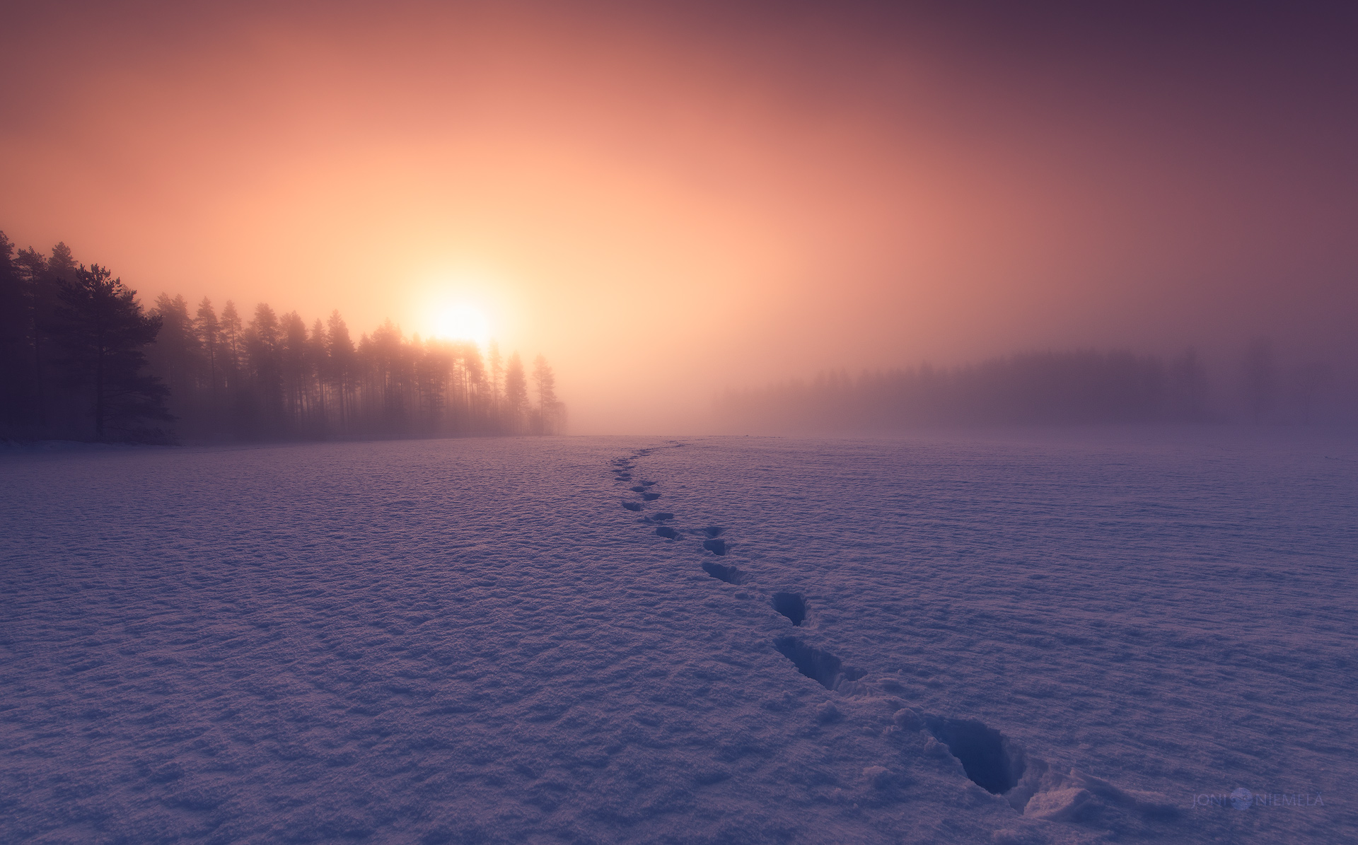 Footprints In The Mist