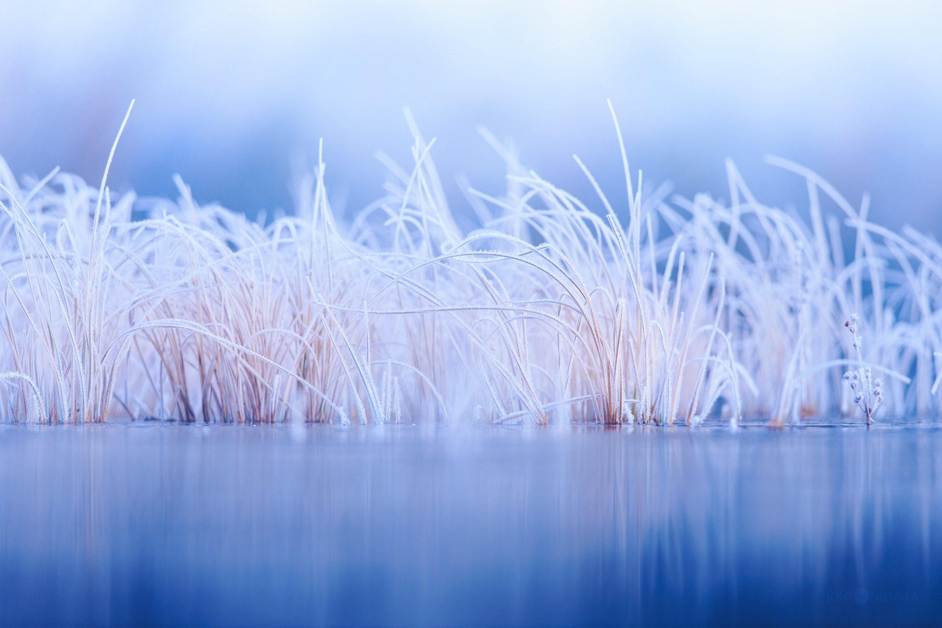 Winter Hays