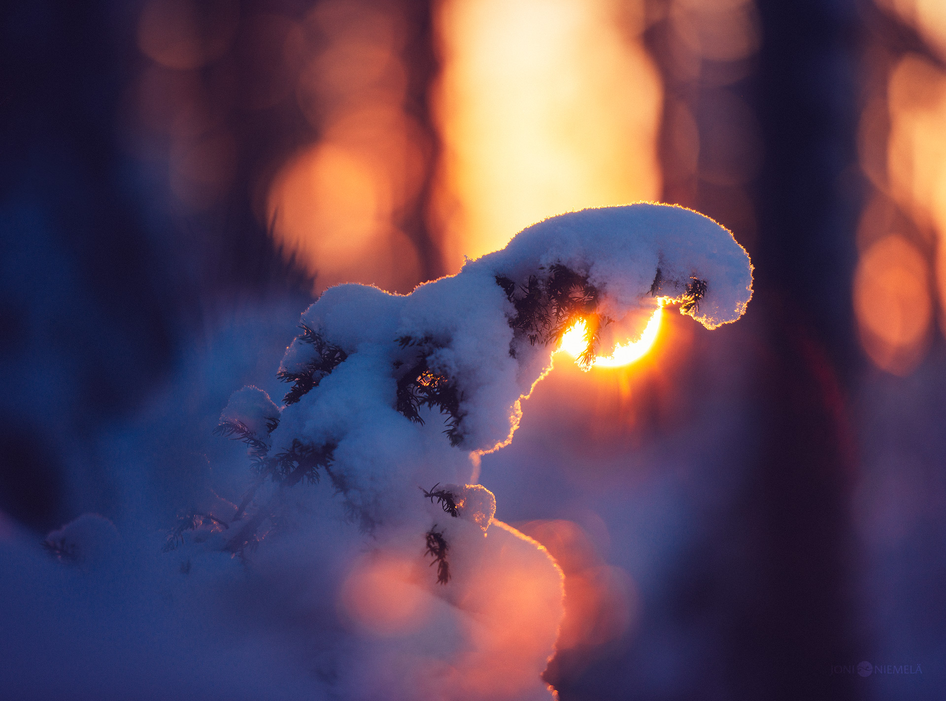 Snowy Juniper