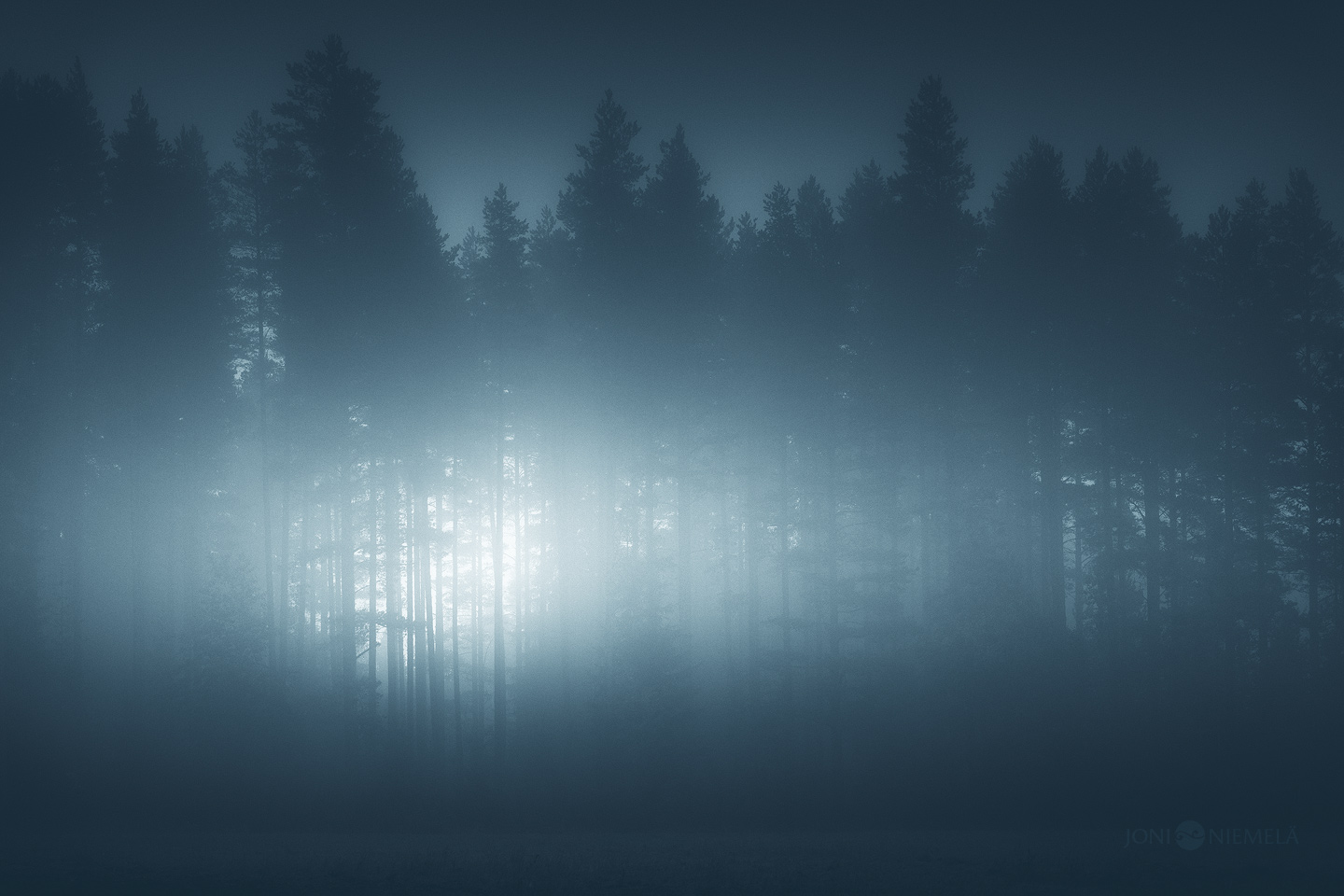 Glimmering Forest