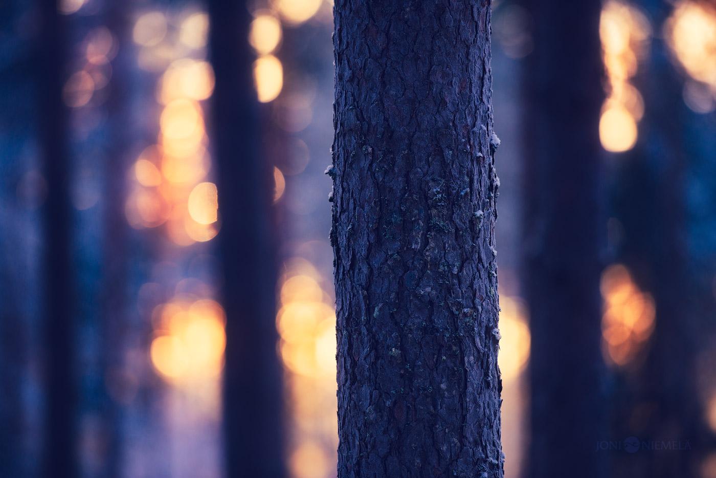 Forest Illuminated