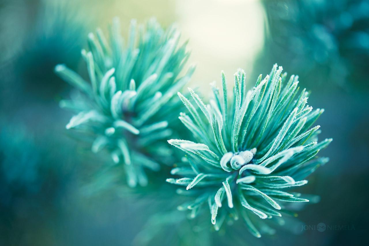 Frost Needles