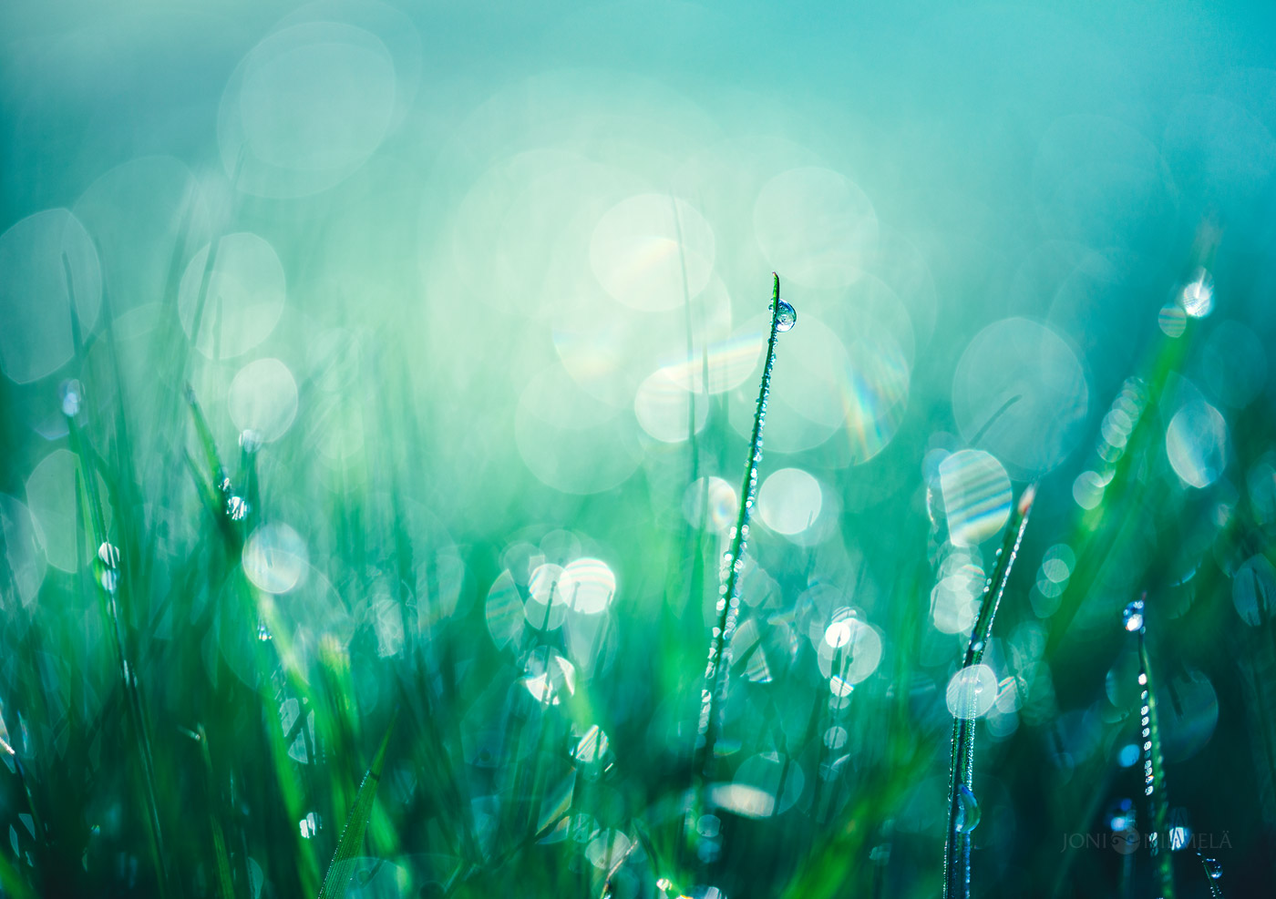 Frozen Morning Dew