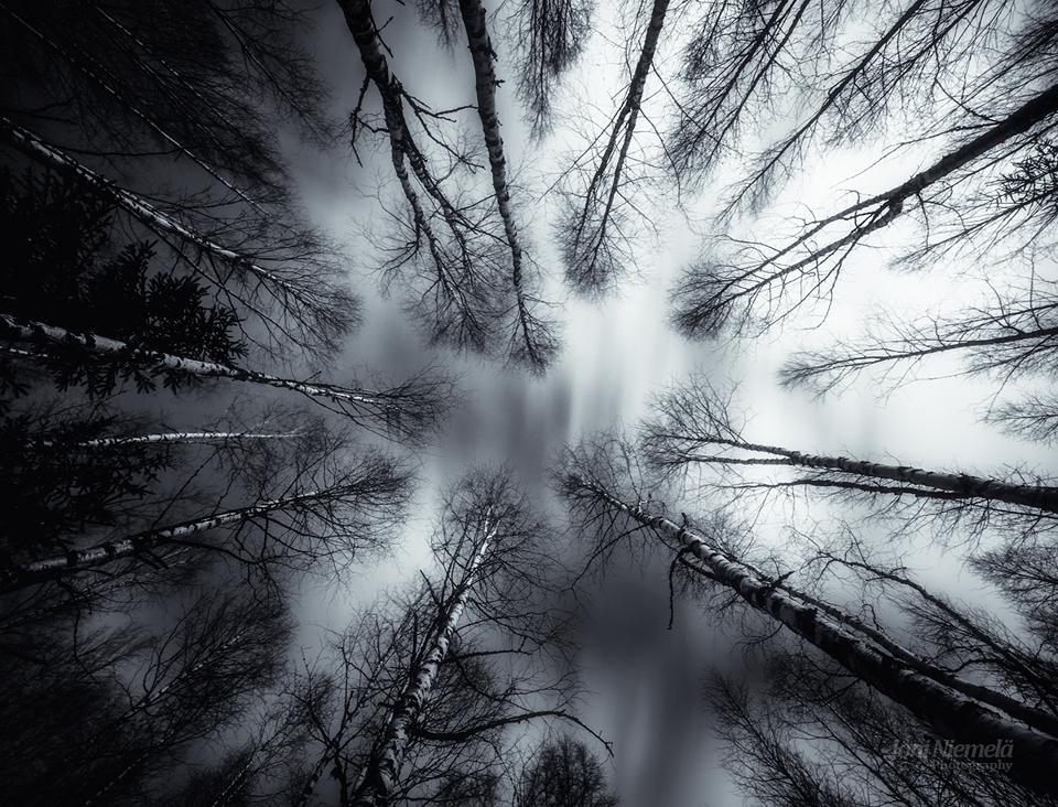 Dark Birches