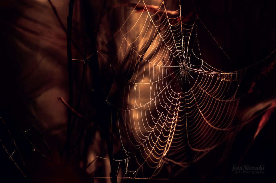 Cobweb In Shadows