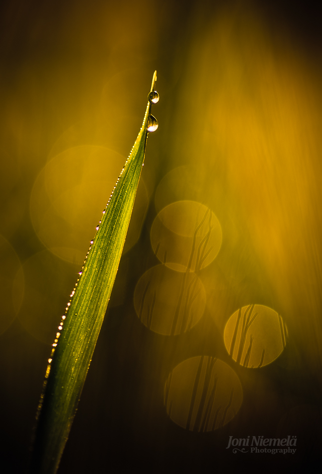 Two Dewdrops