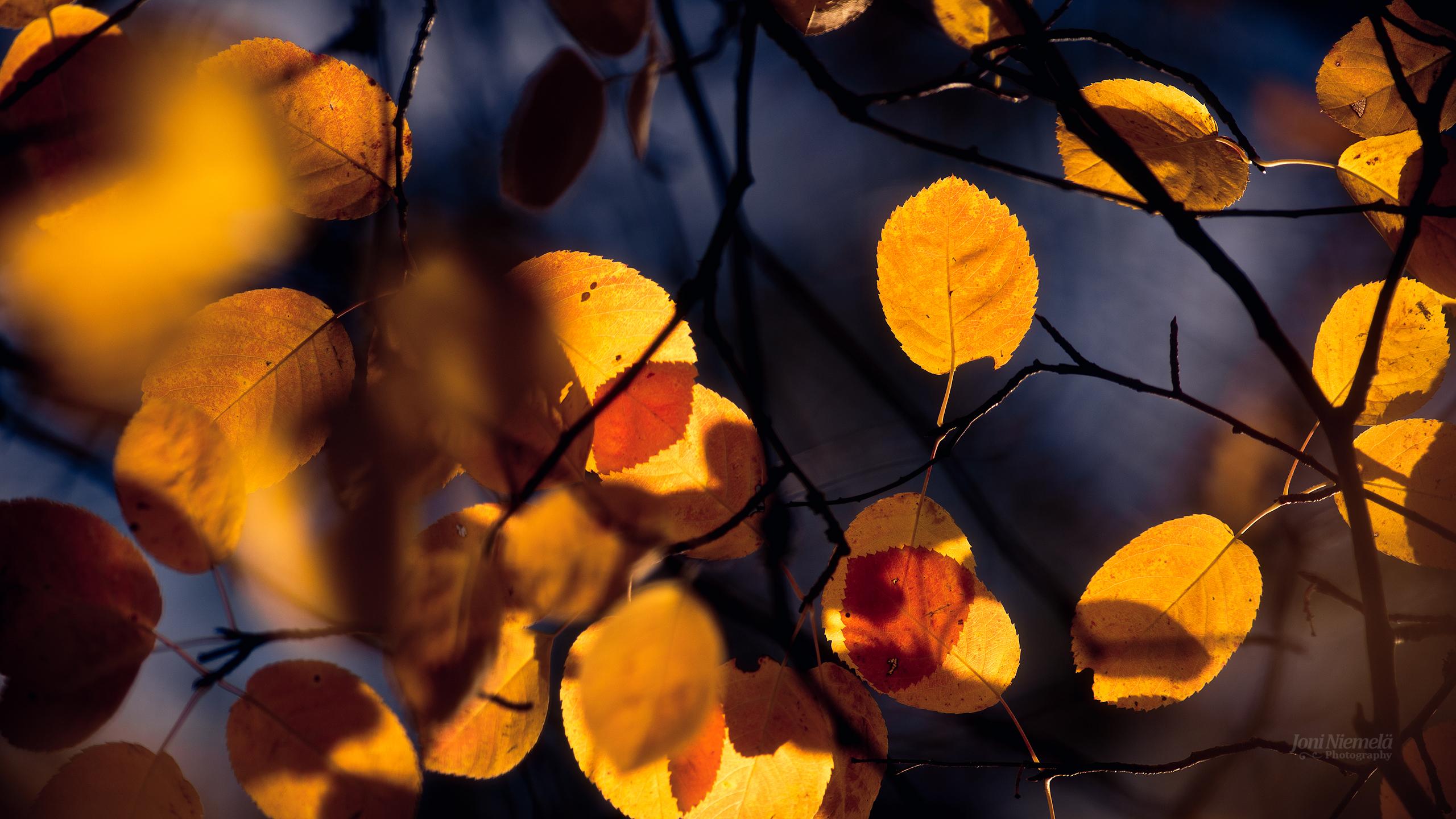Autumn Tones II