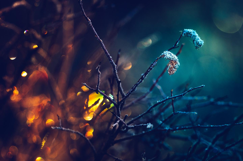 Between Autumn Colors