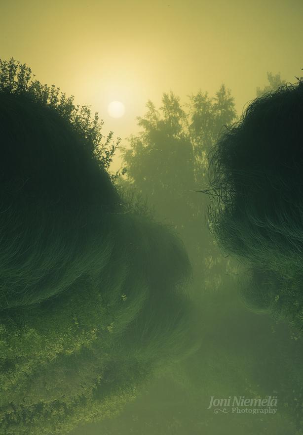 Riverside Fog