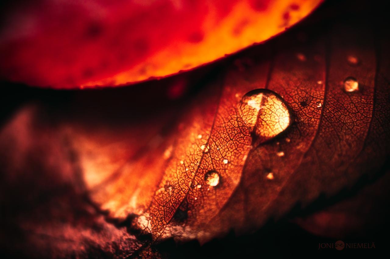 Fall Drop