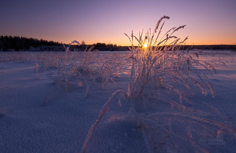 Frozen Hays