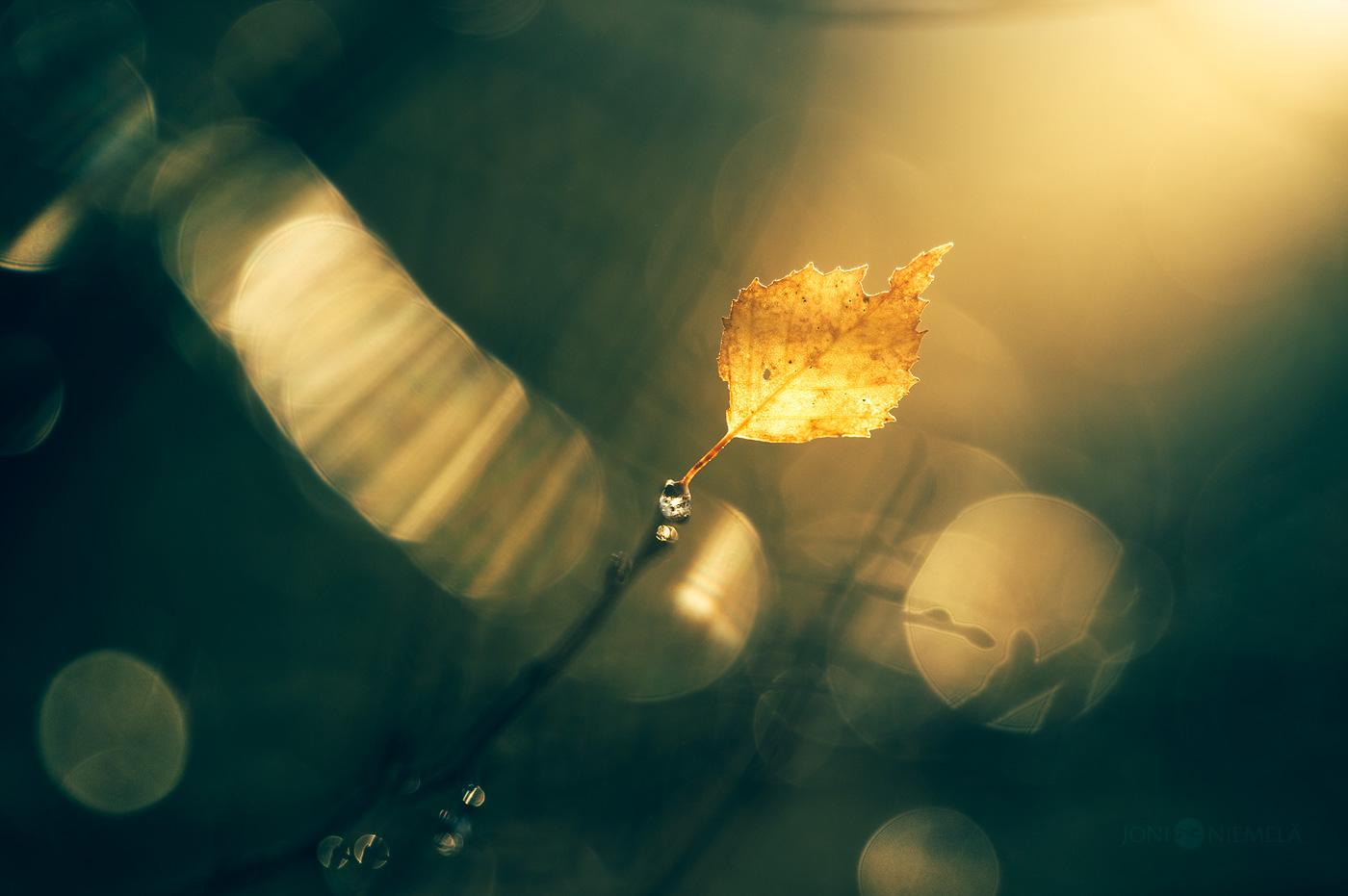 Reaching The Light