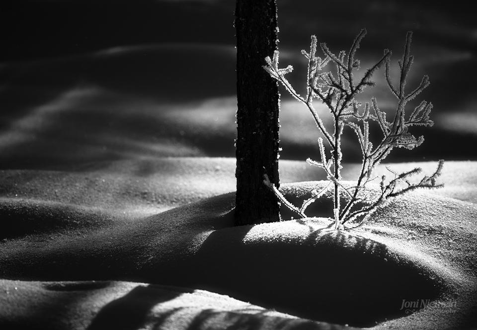 Trees & Snowbanks
