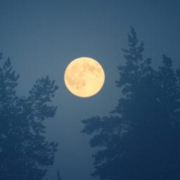 moon_oof